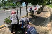 여수시 돌산읍, 가을꽃 식재