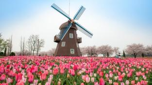 순천만국가정원, 네덜란드에서 유기농 튤립알뿌리 선물받아