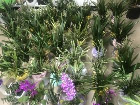 광양시 중마동, 축하 화분으로 위기가정에 반려식물 보급 추진