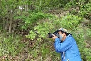여수 망마산에서 산분꽃나무 발견